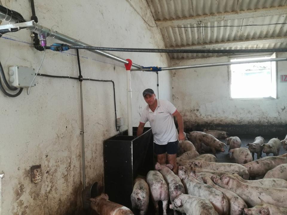 Platile compensatorii pentru crescatorii de porci, nu doar intarziate, ci reduse la jumatate sau chiar deloc