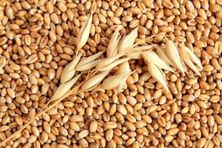Zeci de mii de tone de grau romanesc blocate din cauza a 13 semințe de mac! Mihai Anghel are iar probleme cu egiptenii