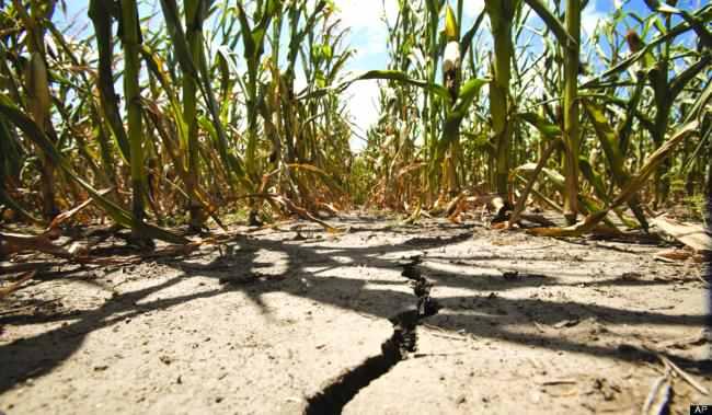 Peste 35.000 ha de culturi agricole, compromise de seceta in Mehedinti