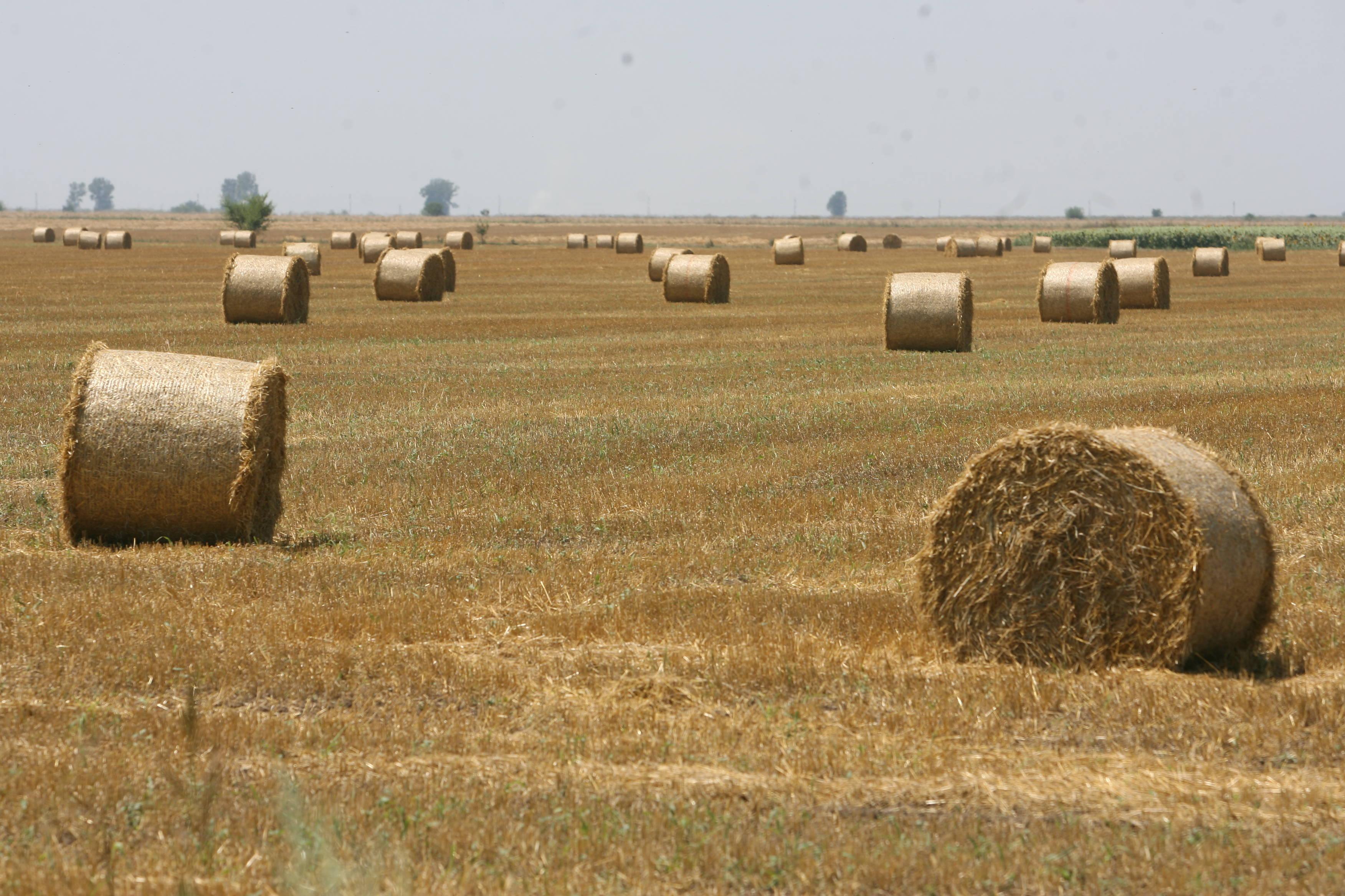 Strainii au urcat preturile la terenurile agricole in Arad pana la 12.000 euro hectarul