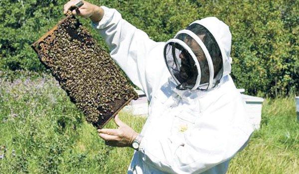 Mai multe cereri, mai putini bani pentru apicultori