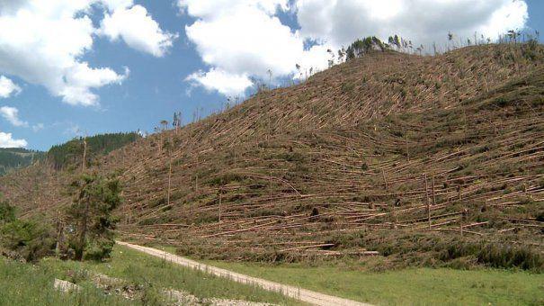 Furtunile din ultima perioada au afectat mii de hectare de paduri