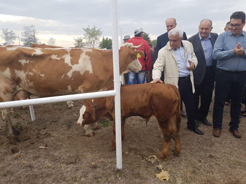 Ajutor exceptional de 228 euro pe cap de vaca
