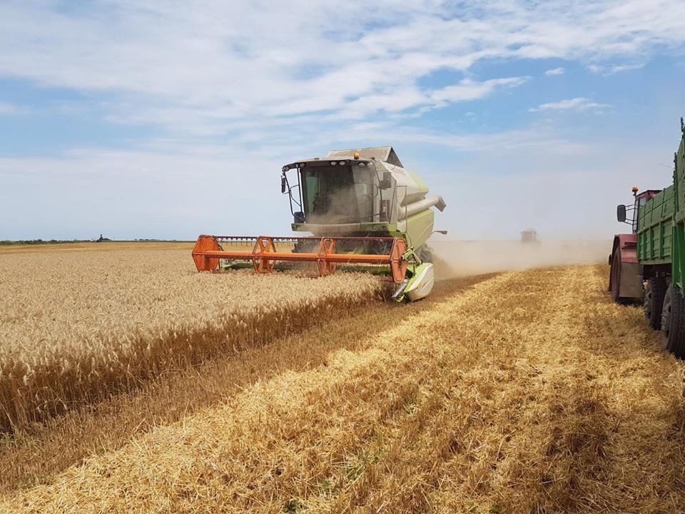 INS: Valoarea productiei agricole a crescut cu 2,5%, in 2016. Zootehnia, pe minus