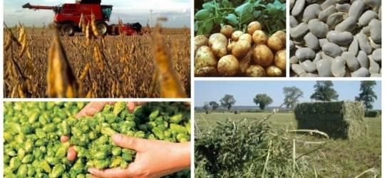 Conditiile pentru obtinerea sprijinului cuplat in sectorul vegetal