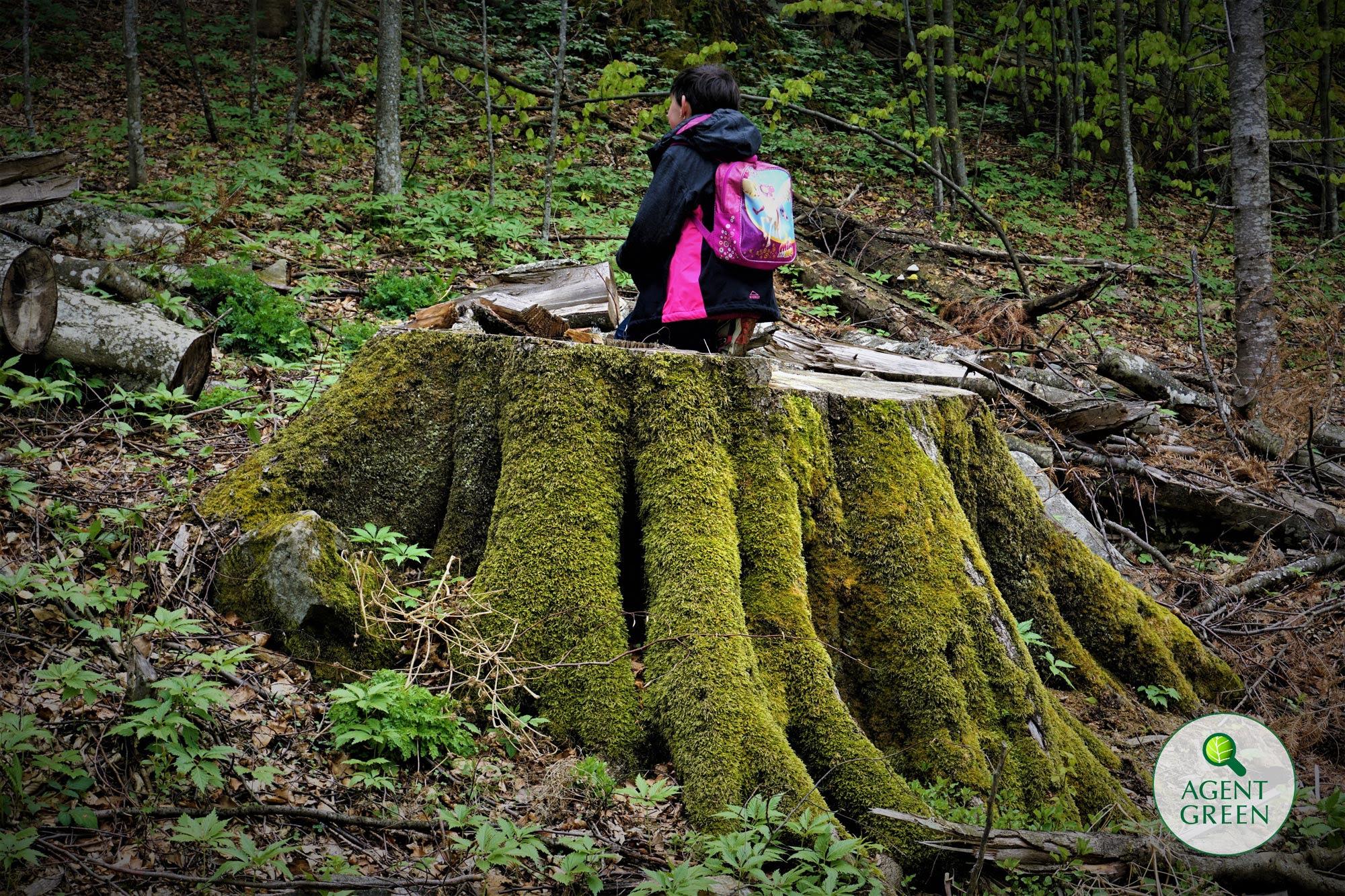 Investigatie: Masacru in parcurile nationale din Romania