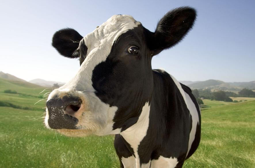 Reguli noi privind pasunatul animalelor domestice. Cine are interdictii si in ce perioade