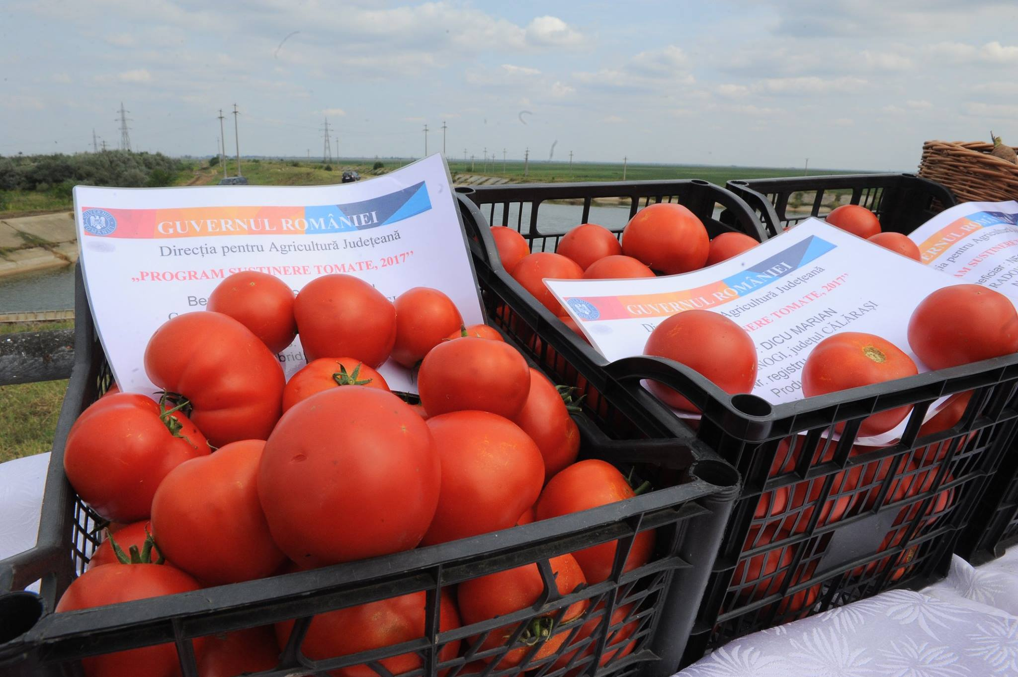"""Importurile de rosii, constante. Programul """"Tomate in spatii protejate"""" continua…."""
