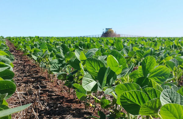 Productii record de soia in Romania si Franta, in 2017