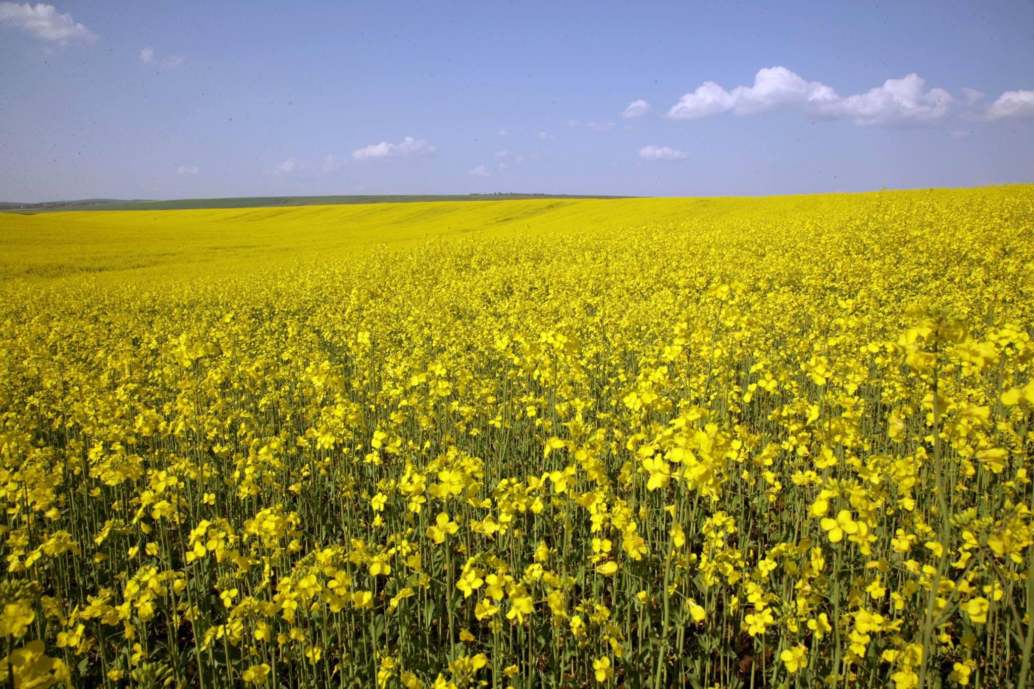 Produse de protectia plantelor neconforme