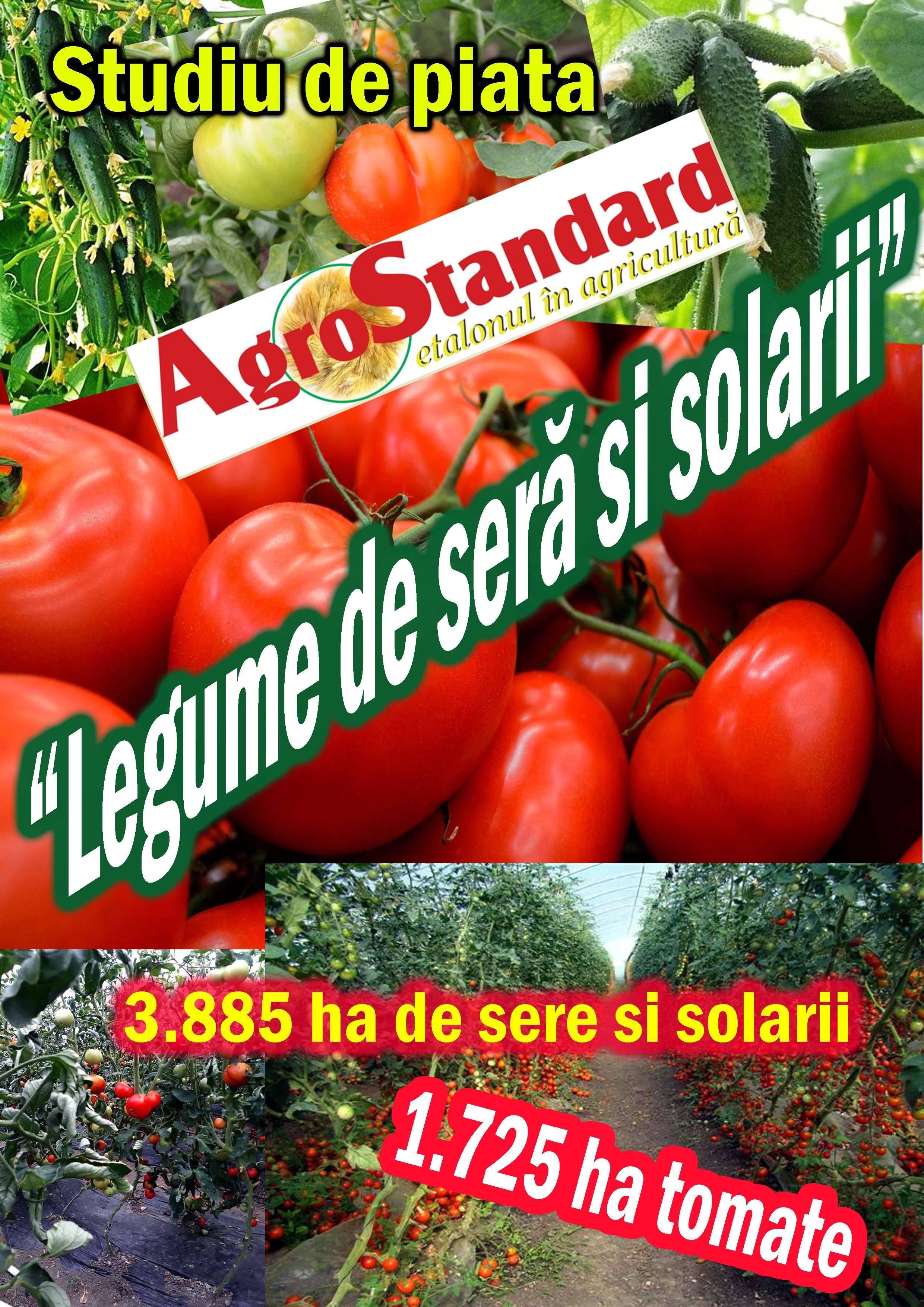 Chinezii si indienii, cei mai mari producatori de tomate din lume. Olandezii, cel mai mare randament