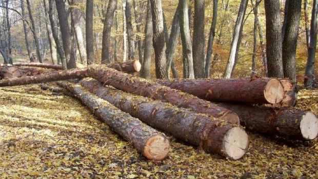 Incepe Luna Padurii! Comunitatea Forestierilor anunta un dezastru economic, social si de mediu