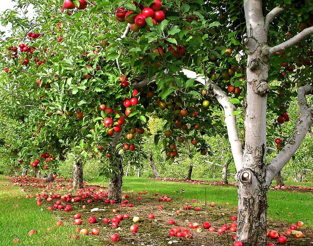 Romania transformata intr-o colonie. Doar 57% din consumul de fructe este asigurat din intern