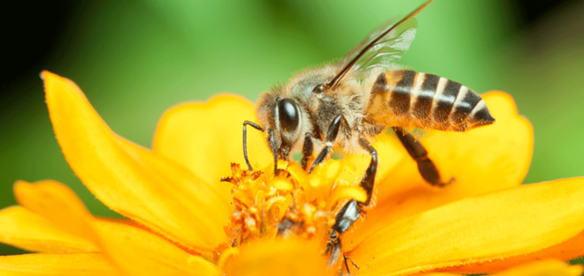 UE a interzis trei neonicotinoide periculoase pentru albine