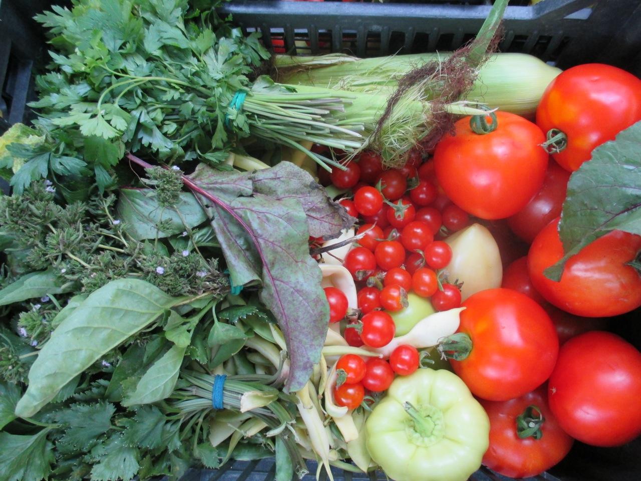 Romanii se indoapa cu legume si cartofi de la polonezi