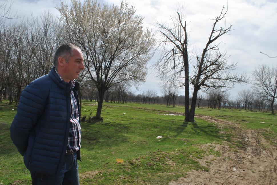 Investitie de 1,5 mil. euro intr-o plantatie de duzi si o fabrica de prelucrare a matasii la Pestisani (Gorj)