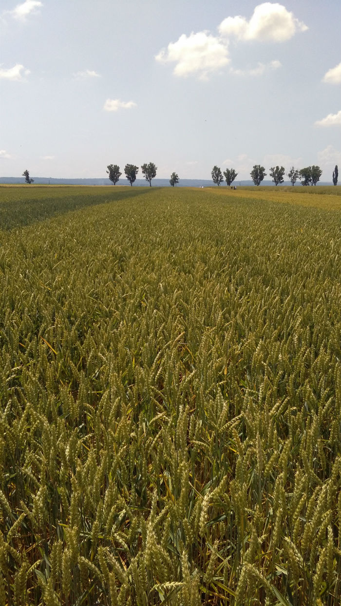 Inca 5 cooperative agricole s-au afiliat la UNCSV