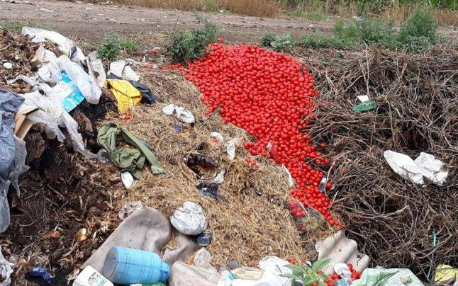 Incredibil! Cum au ajuns oltenii sa arunce tone de rosii la gunoi?!