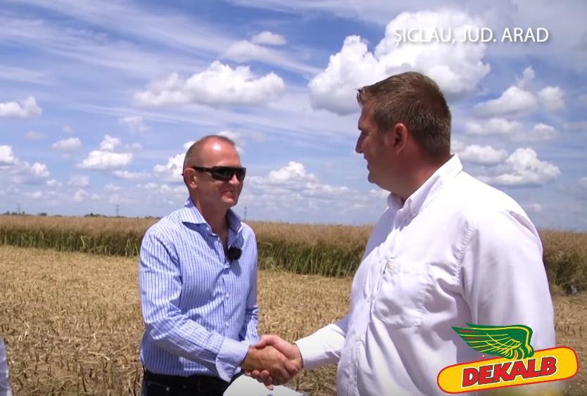 Topul producatorilor de rapita DEKALB, in 2018. Primele locuri sunt ocupate de fermieri din Arad, Bihor si Teleorman