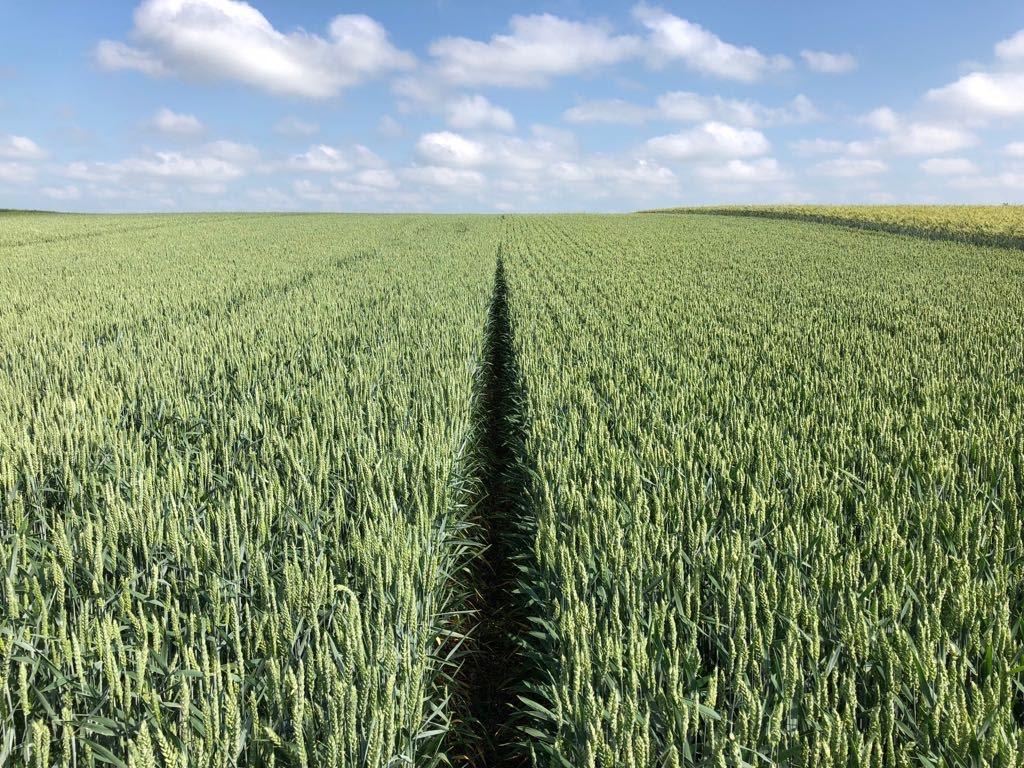 FAO estimeaza scaderea productiei de cereale si a rezervelor, in acest an