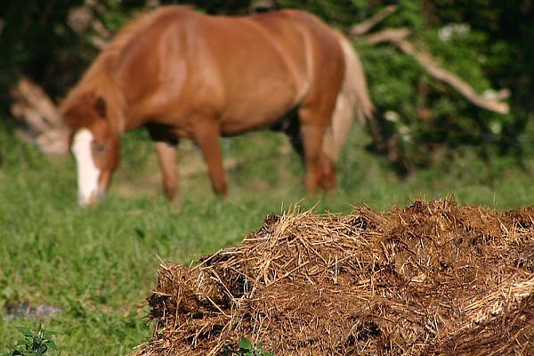 Conditiile de depozitare a gunoiului de grajd pentru fermele zootehnice mici si medii