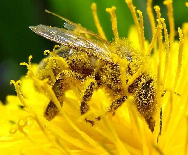 Productie de miere mai mica cu 30%, in acest an, din cauza vremii capricioase