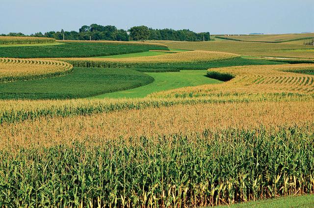 FAO estimeaza o productie de cereale mai mica cu 2,4%, in 2018. Rusii mizeaza pe grau, americanii pe porumb