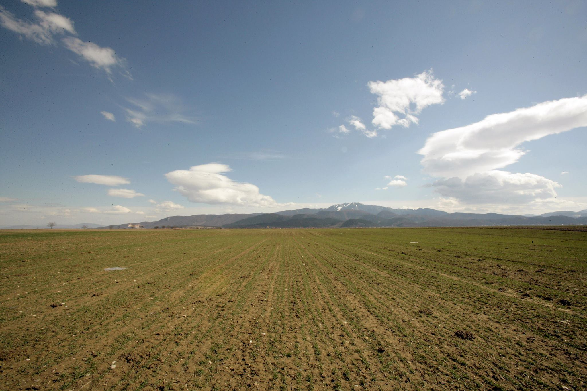 APIA a autorizat la plata 263,7 mil. euro pentru 509.475 fermieri, in decembrie