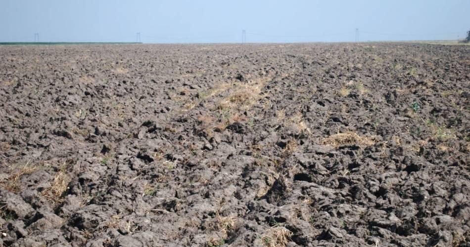 Petre Daea: Rapita a avut cel mai mult de suferit din cauza secetei din aceasta toamna