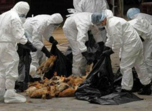 Autoritatile din Dolj in alerta, din cauza focarului de gripa aviara de la Vidin