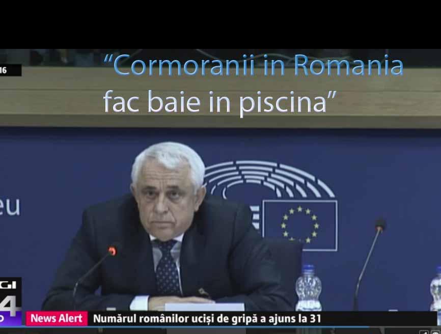 Bravo! Formidabil! Extrem de important! Cormoranii in Romania fac baie in piscina!