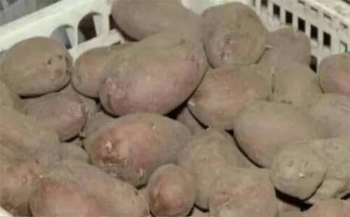 Criza mare de cartofi