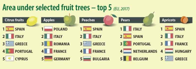 Top producatori mere in UE. Romania, locul trei