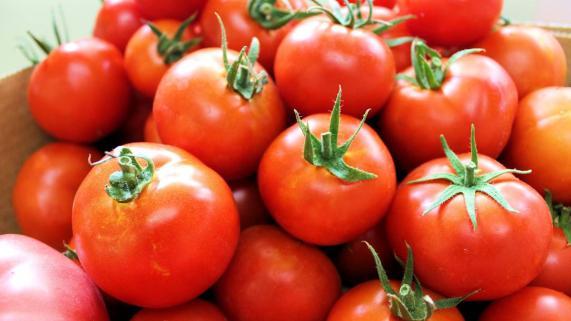 Termenul de depunere a cererii de inscriere in programul Tomata ar putea fi prelungit pana la 20 martie