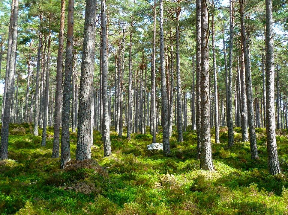 APIA primeste Cereri de de sprijin pentru ajutorul de stat -Servicii de silvomediu, servicii climatice si conservarea padurilor