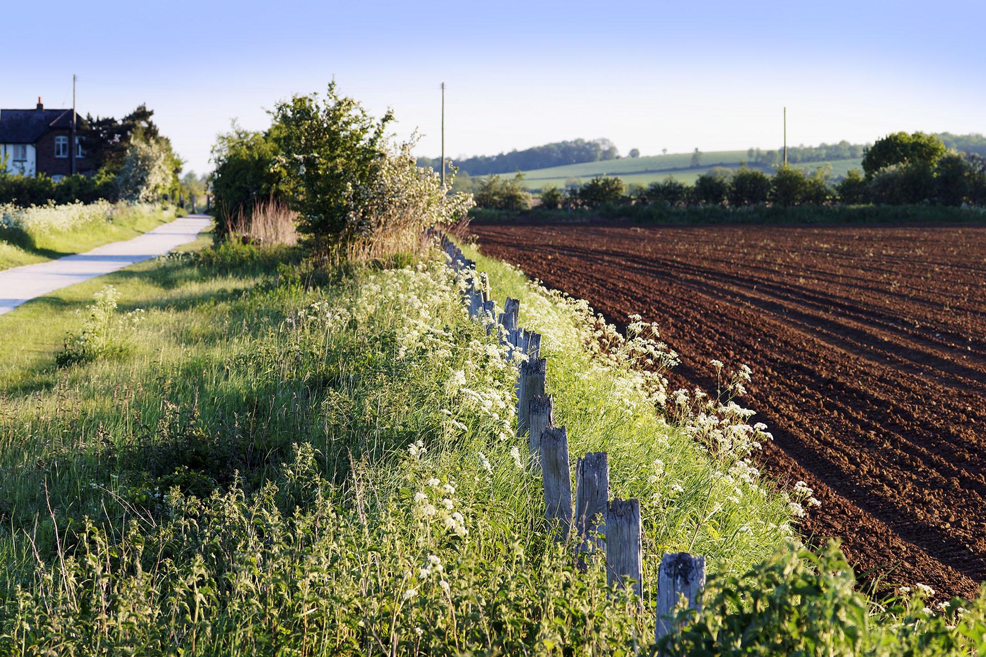 Cum se calculeaza cantitatile de azot ce se administreaza culturilor agricole