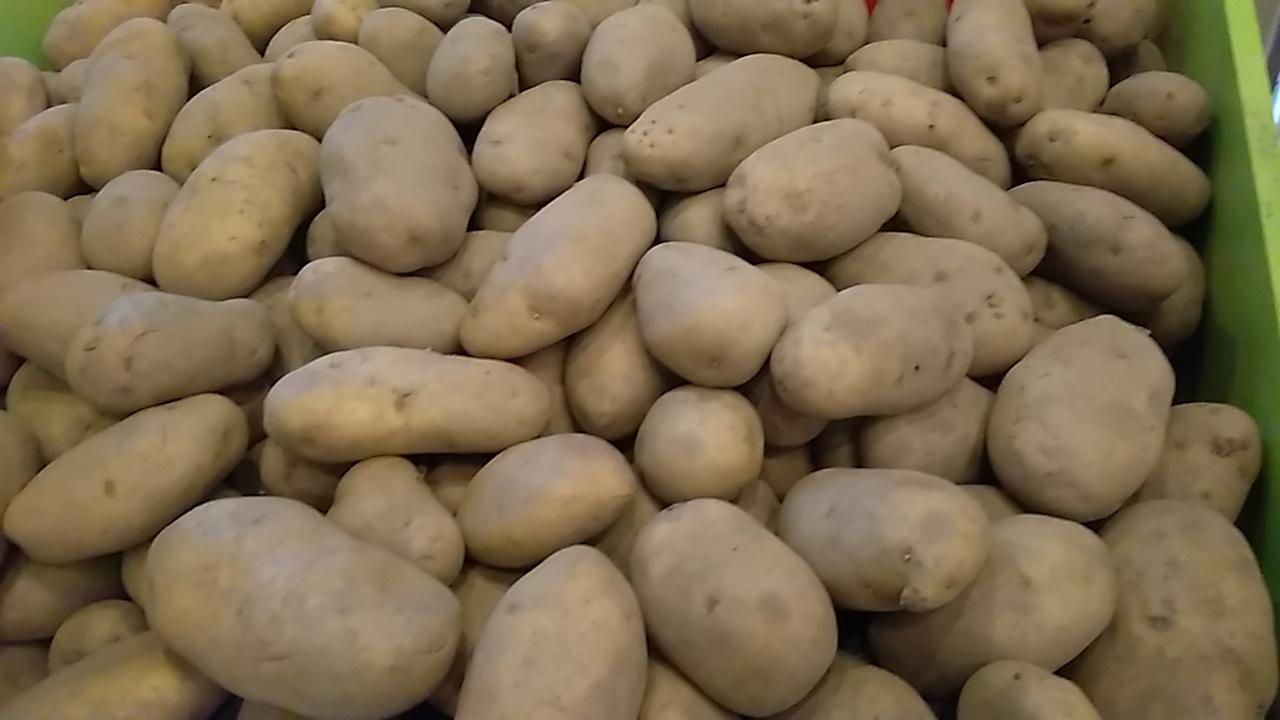Cartoful extratimpuriu, o oportunitate de castig pentru cultivatorii din sudul tarii