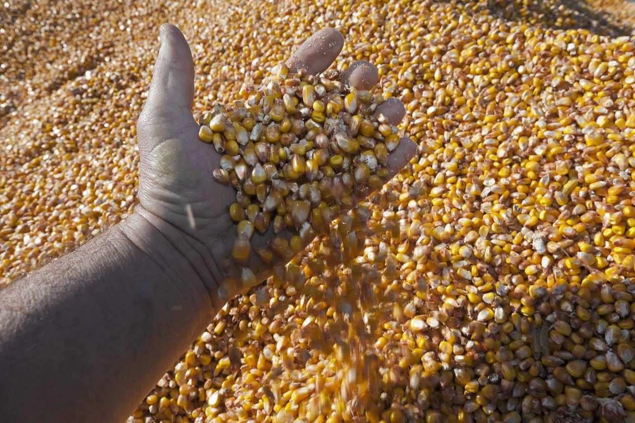 INS: Productia vegetala la principalele culturi, in 2018. Suprafete mai mici la cereale, productii mai mari
