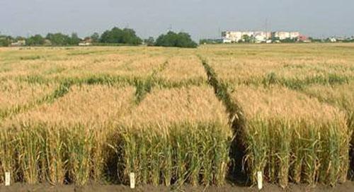 Reuniune a Comisiei de inregistrare a soiurilor de plante  agricole si horticole in data de 28 martie