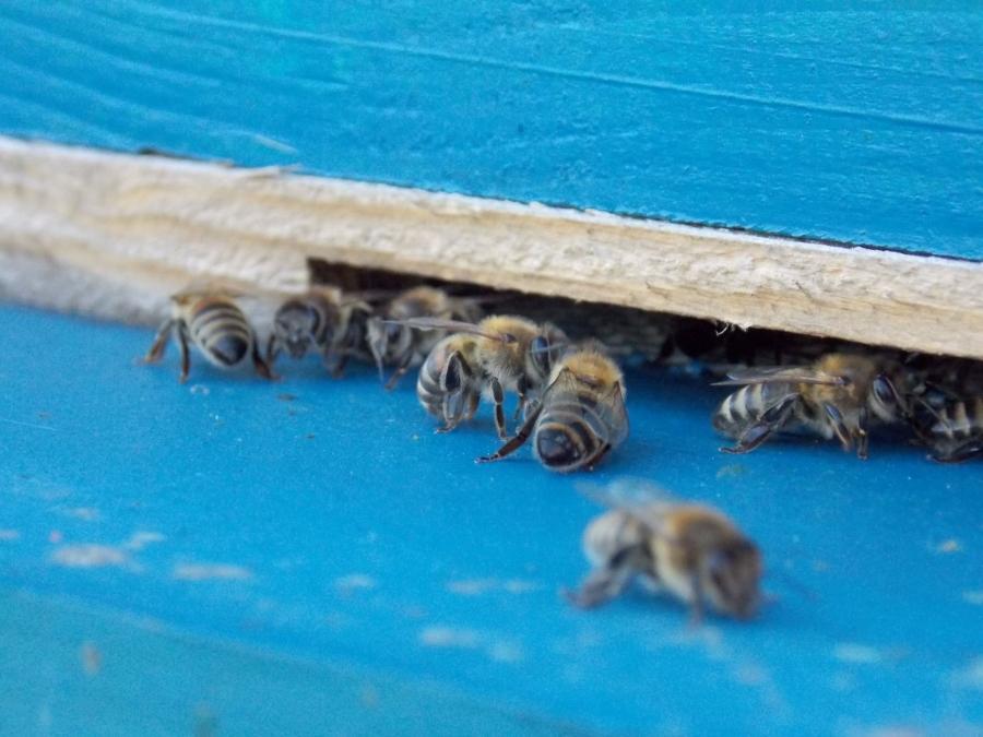 Important pentru apicultori: Noi reglementari ale Programului National Apicol