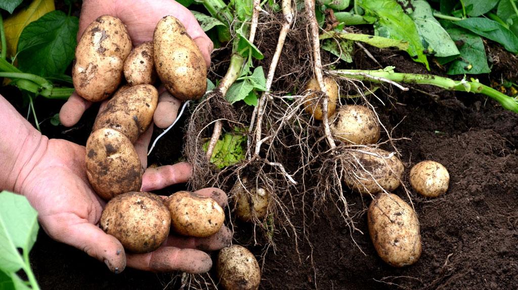 Scumpirile au ajuns la cel mai ridicat nivel din ultimele 6 luni, in martie. Cartofii, pe primul loc