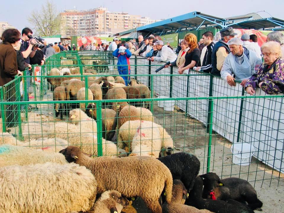 MADR: S-a deschis Centrul de sacrificare miei in Piata Aparatorii Patriei din Capitala