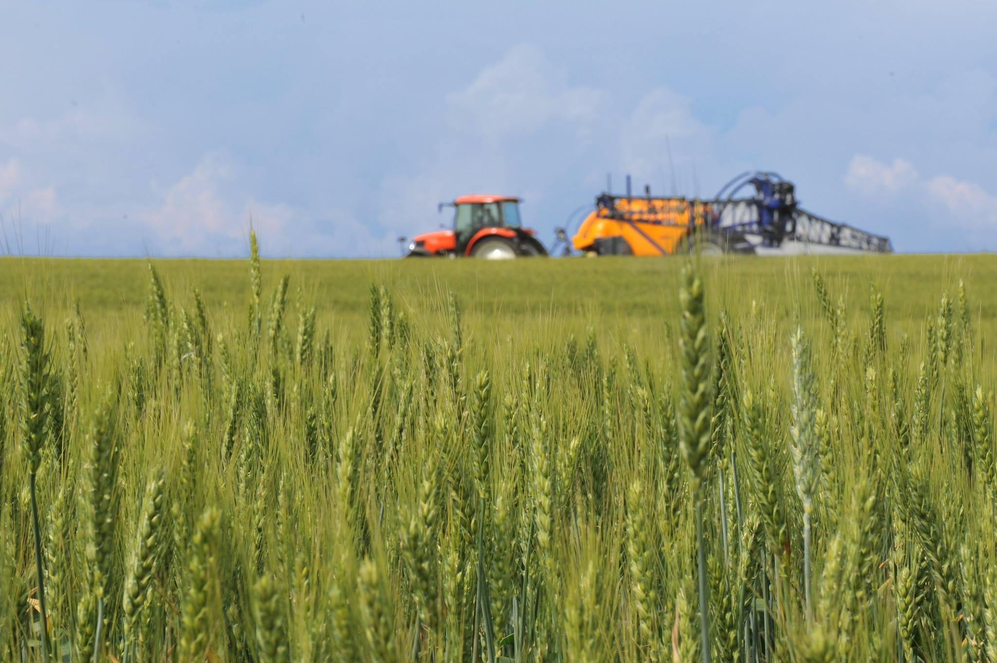 """Cum puteti sa va asigurati culturile agricole! AFIR a lansat sM 17.1 """"Prime de asigurare a culturilor, animalelor si plantelor"""""""