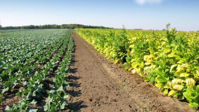 Vin banii pentru sprjinul cuplat in sectorul vegetal pentru anul 2018