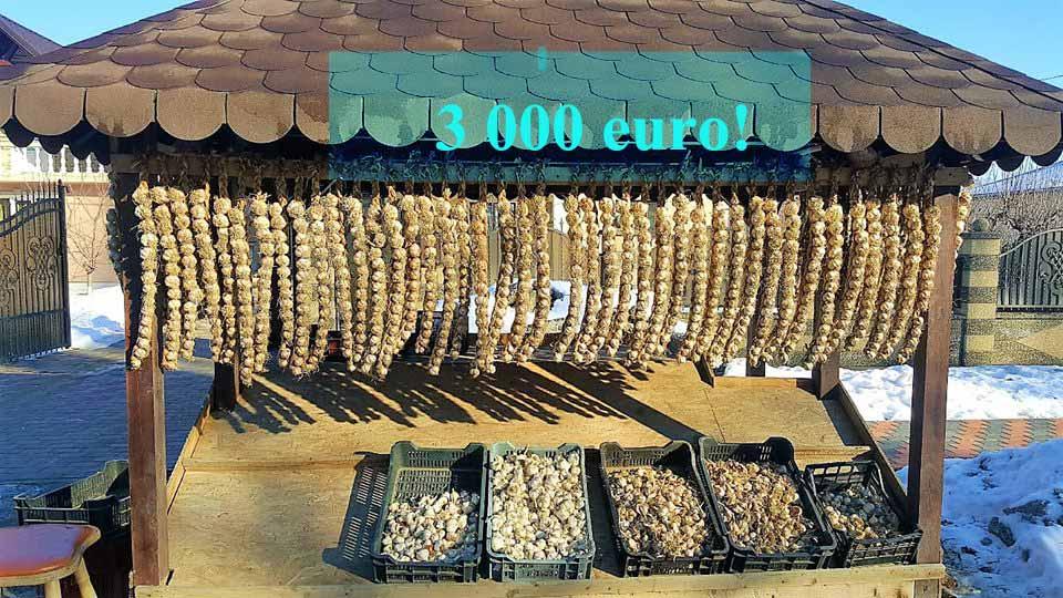 Sprijin de 3.000 euro/ha  pentru cultivatorii de usturoi!