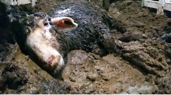 Animals International solicita ANSVSA sa suspende exportul de animale vii catre tarile terte in timpul verii