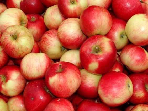 Polonezii asteapta o productie mica de mere, in acest an