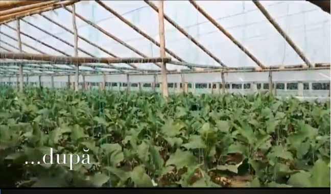 Angajatii din Ministerul Agriculturii au facut cheta pentru un legumicultor din Calarasi