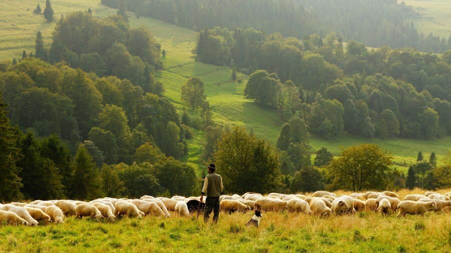 O noua rasa de oi urmeaza sa fie omologata, in iulie