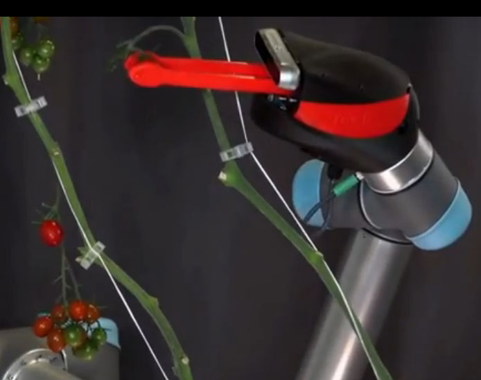 Tehnologie. Robot for picking Vegetables in Indoor Farms